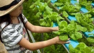 Backyard Aquaponics Fantastic Step-by-Step Video
