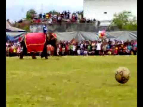 gajah main bola? beneran nih.???? - YouTube