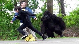 Goril Şakası