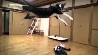 Divertida pelea de perro vs gato
