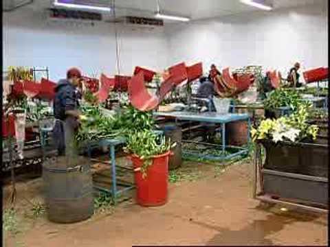 Cultivo de flores e plantas ornamentais