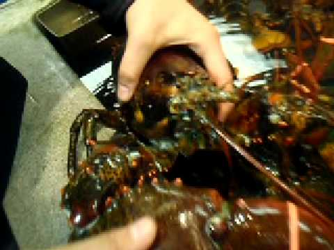 Biggest Lobster claw EVER! - YouTube