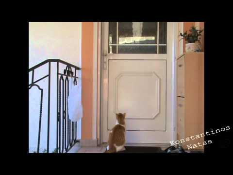 Smart cat open doors