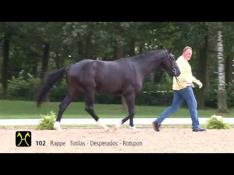 Hanoverian Stallion Licensing and Sales - Catalog-No. 102