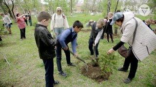 Массовой посадкой деревьев отметили Международный День семьи в Артёме