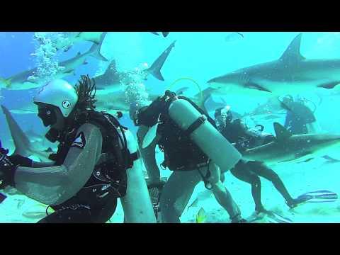 Requins aux Bahamas