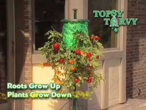 Topsy Turvy Tomato Tree - As Seen on TV Network