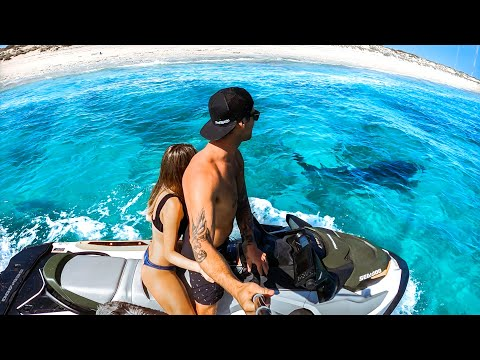 Baby Turtles, Swimming With TIGER SHARK & Close Call With The DEADLIEST Fish In The Sea - Ep 160