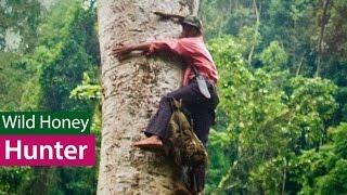 Săn Mật Ong Rừng - Nghề nguy hiểm (Wild Honey Hunters)