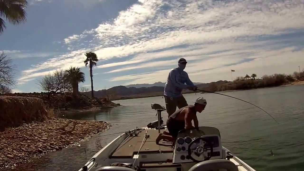 Lake havasu bed fishing with randy cnota youtube for Lake havasu fishing