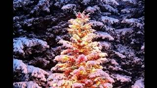 Boney M - Oh Christmas Tree