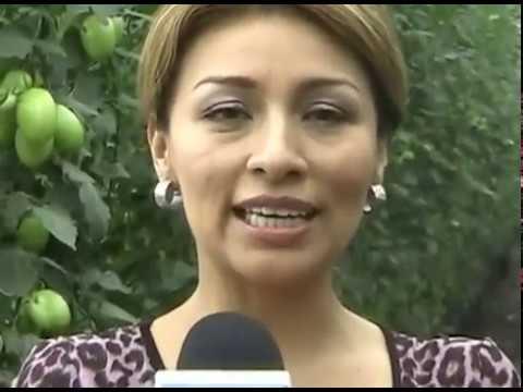 Reportaje Invernadero de Jitomates Tetelpa, Morelos con Fanny Alfonzo (2da parte)