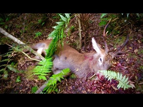 Hunting Red deer in New Zealand part 64