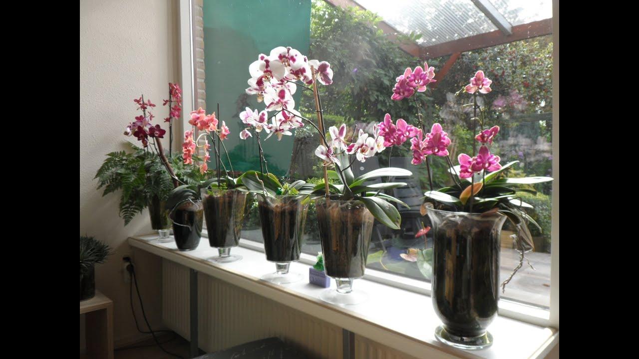 Выращивание орхидей. Уход за орхидеей в домашних условиях 30