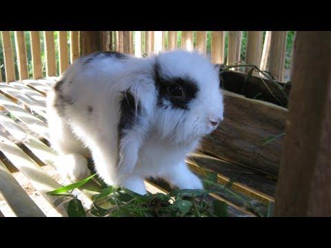 Ternak Kelinci - Ternak Kelinci Hias Yang Menguntungkan