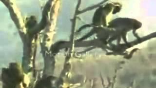 Monos traviesos