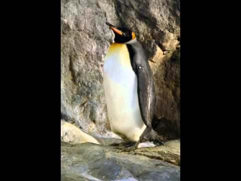 Emperor Penguin Facts - Facts About Emperor Penguins