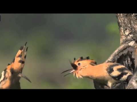 Tình mẫu tử cao đẹp của loài chim