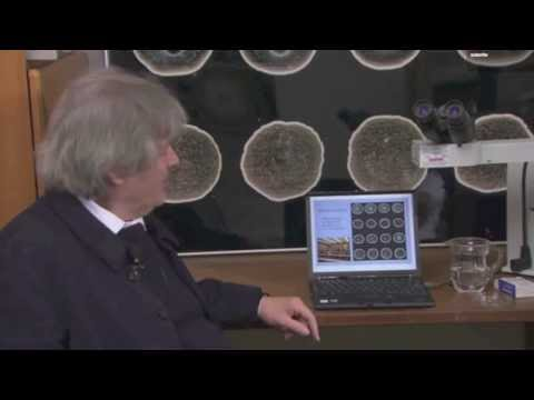 WHY SHOULD WE PRAY 5 TIMES? Science Explanation