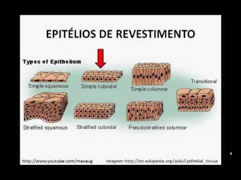 Resumo de Histologia 01 - Tecido Epitelial