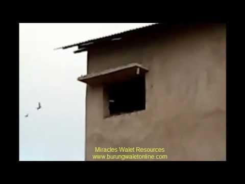 Rumah Burung Walet - Malaysia 2012