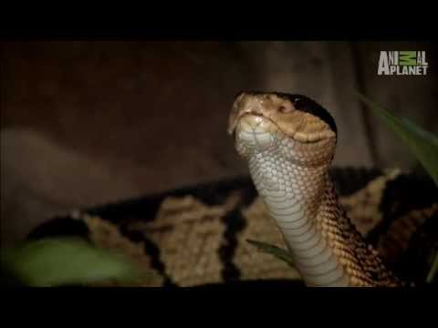 animal planet how to watch