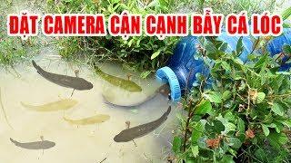 Đặt Camera cận cạnh bẫy cá lóc