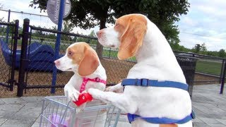 Dog Takes Puppy on Journey in Shopping Cart