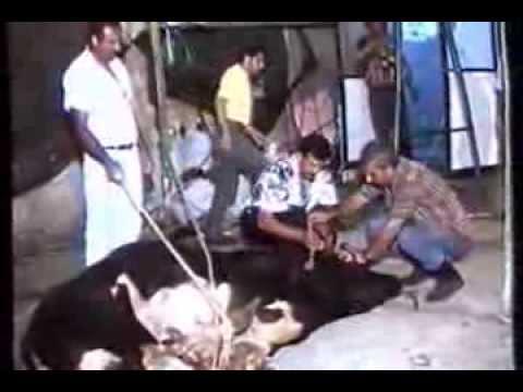 1993 الذبح في الاعراس قرية نحف  -