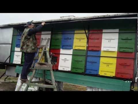 noi lăzi de albine... renovare la pavilion 2011.