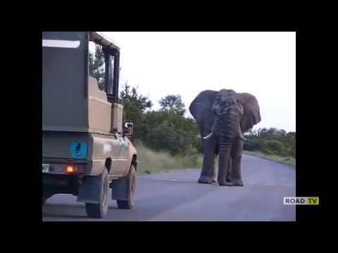 Машина против слона