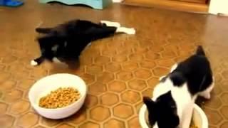 Alkolü fazla kaçıran kediler