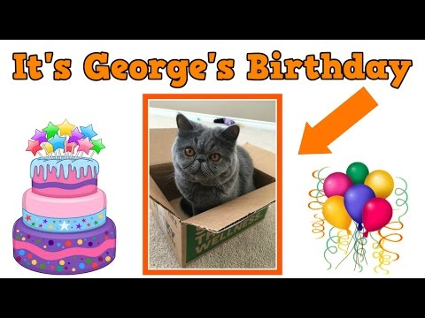 Funny Cat Birthday Party - It's George's Birthday