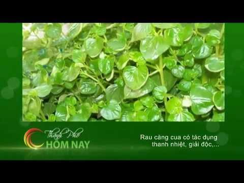 Lợi ích của rau càng cua - Thành Phố Hôm Nay [HTV9 -- 30.05.2014]