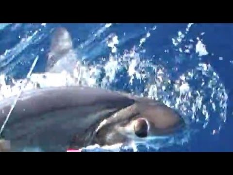 how to catch swordfish in south florida
