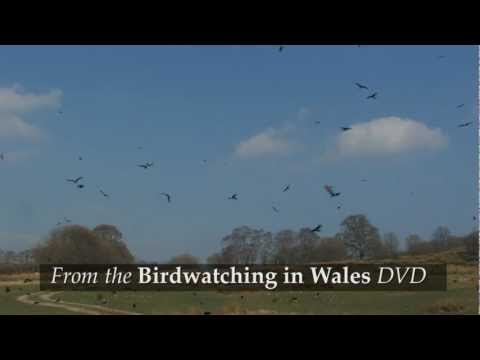 Birdwatching in Wales