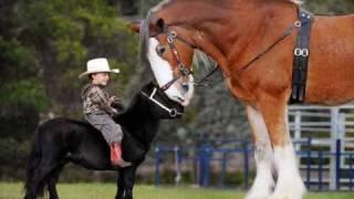 caballos y risas