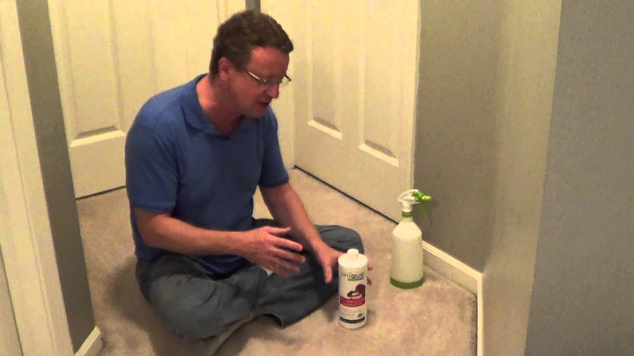 how to clean up cat pee in carpet