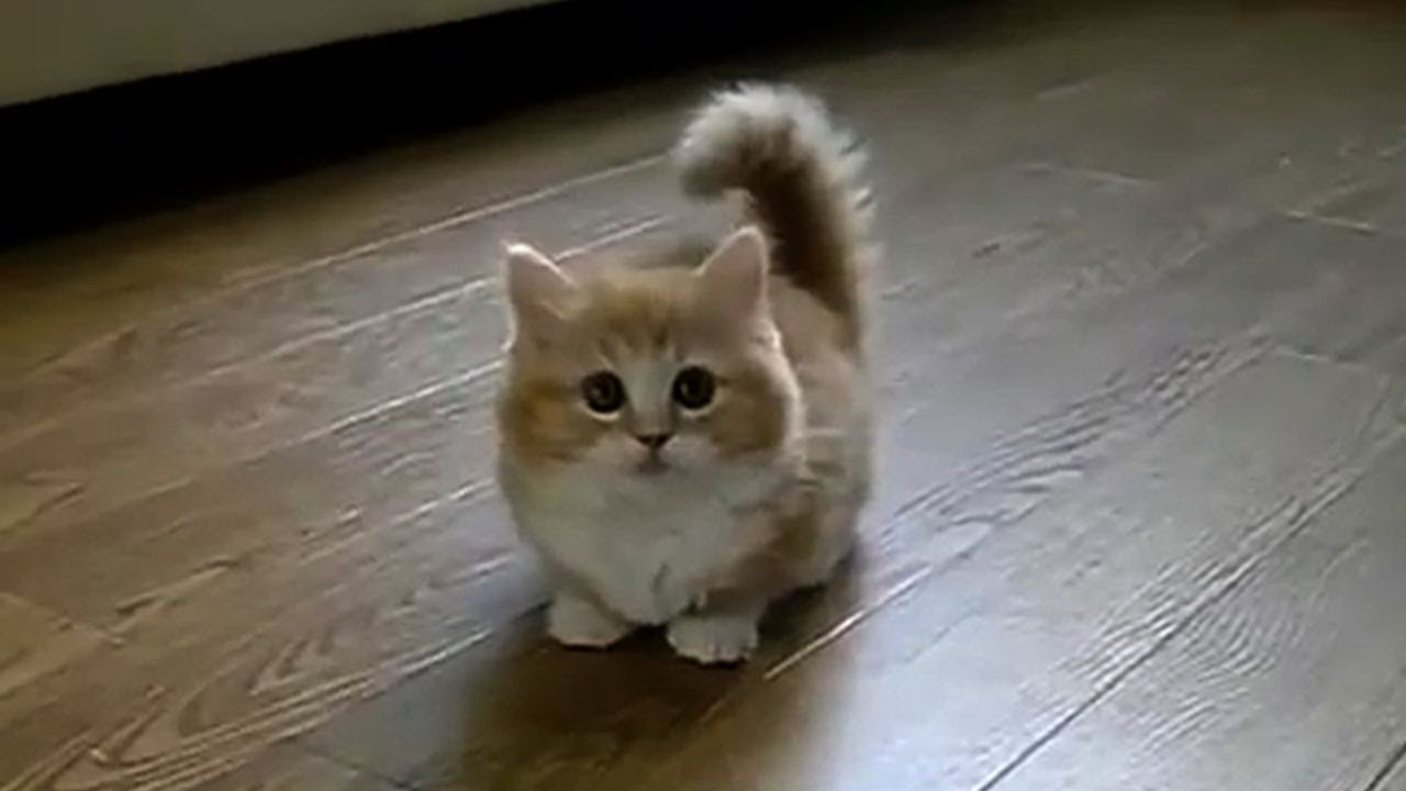 TOP 10 BEST CAT VIDEOS OF ALL TIME! - YouTube