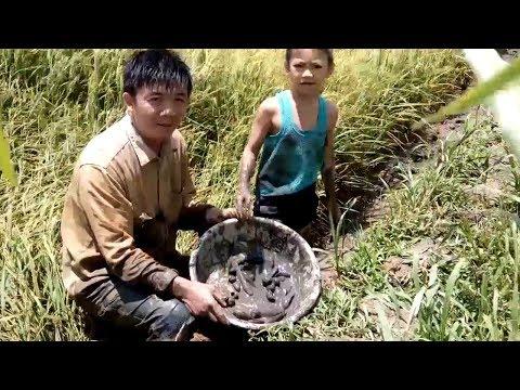 ký ức miền tây về miền quê ra ruộng tát rãnh nước bắt cá mùa lúa trĩu bông
