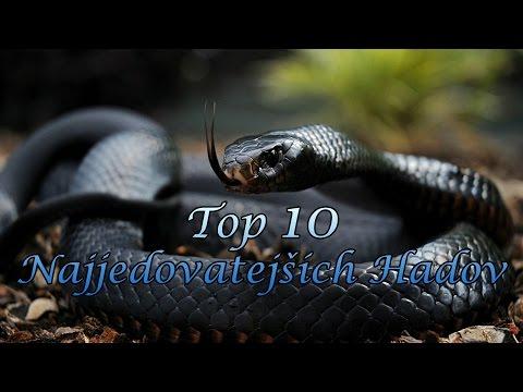 Najnebezpečnejšie hady sveta