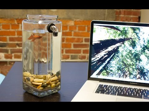 NoClean Aquariums - Betta Fish Tank