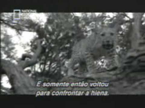AMAZING ANIMAL ATTACK
