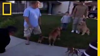 Huấn luyện chó dắt ra đường không kích động khi thấy chó khác ( Xã hội hóa)