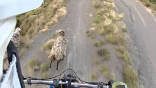 Bikers Rio Pardo | Vídeos | Ciclistas versus animais: uma combinação perigosa
