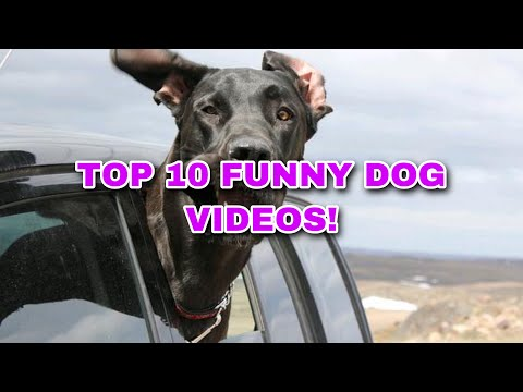 Top 10 Funny Dog Videos! (2020)