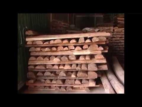 Producion de Balso - Madera de Balsa - TvAgro By Juan Gonzalo Angel