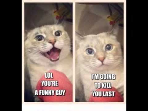 funny animal pictures with captions   youtube