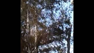 Rifle Aire Comprimido Mahely 4.5.mp4