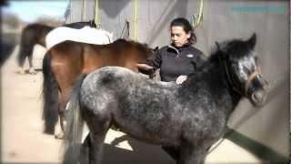 Equitación 10. Clases De Ponis